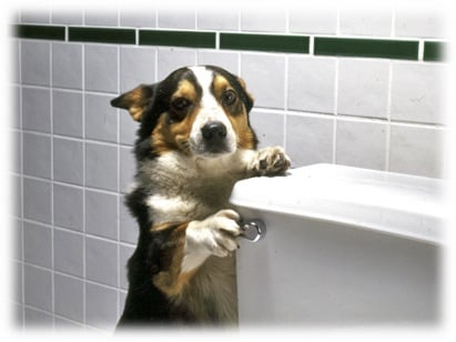 Protect Your Plumbing From Your Pets